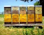 beehive_large